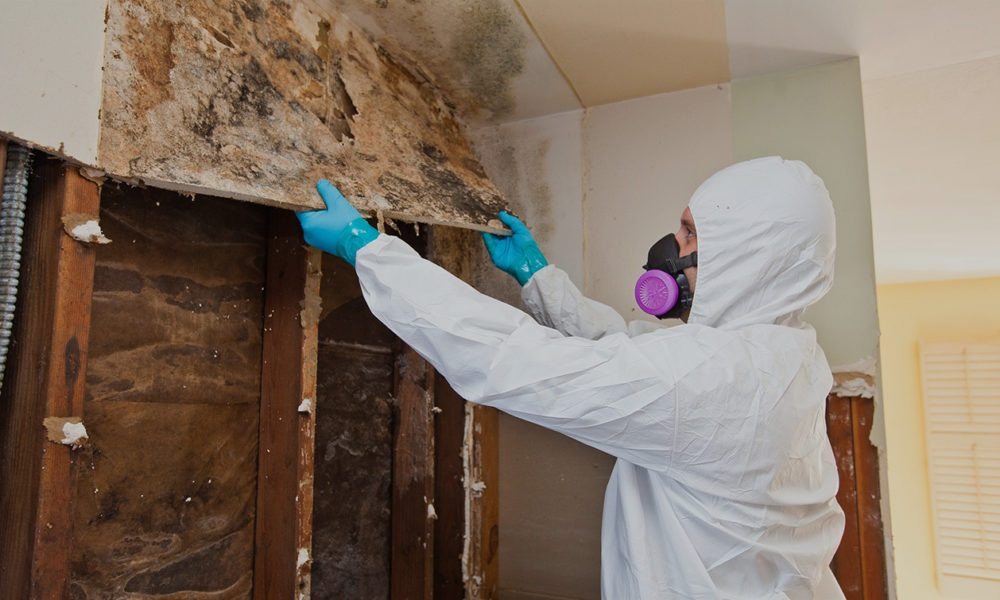 Who Should You Hire for Cleaning Mold?