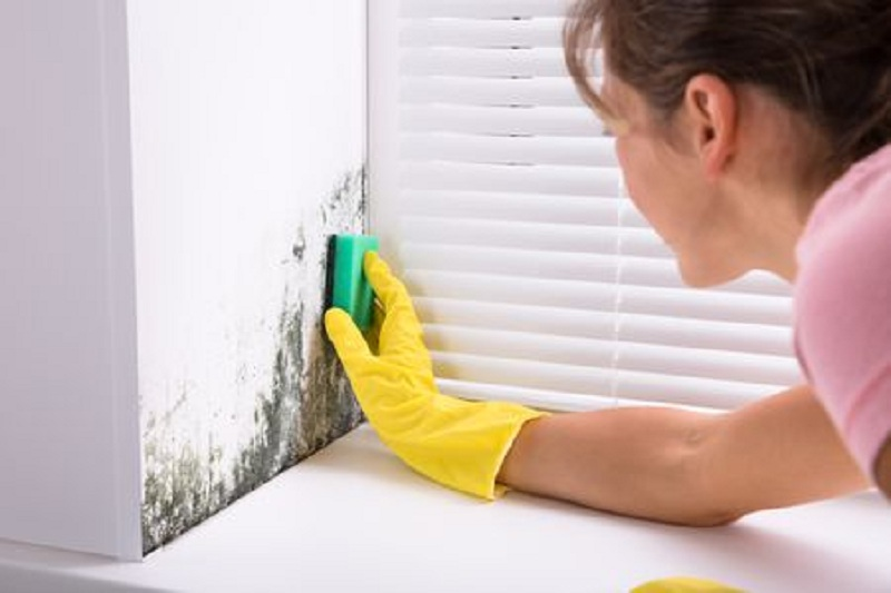 Mold: A Problem that has to be Solved Immediately