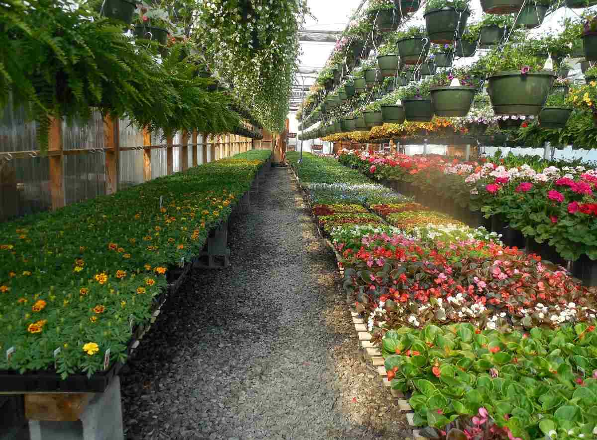 Beginner's Guide to Landscaping Design and Maintenance Services in Singapore